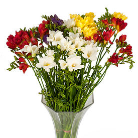 Freesia flower delivery