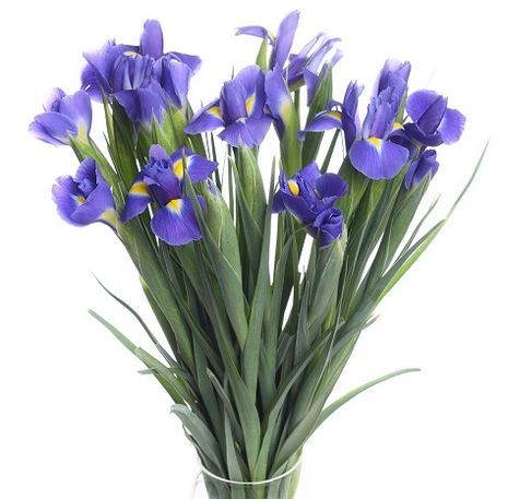 Iris flower delivery
