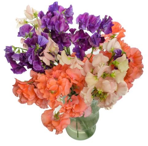 Sweet peas flower delivery