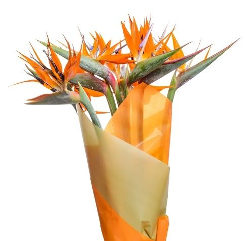 Strelitzia flower delivery