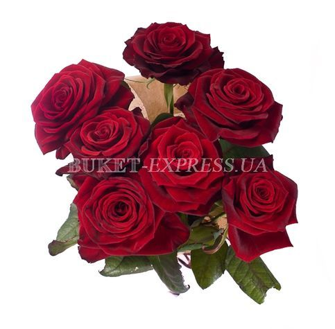 7 Grand-Prix roses flower delivery