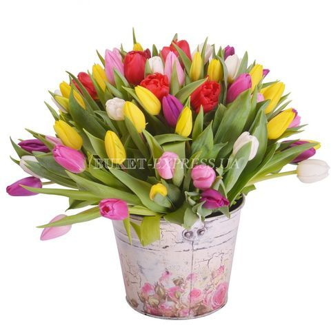 Mixed tulips flower delivery